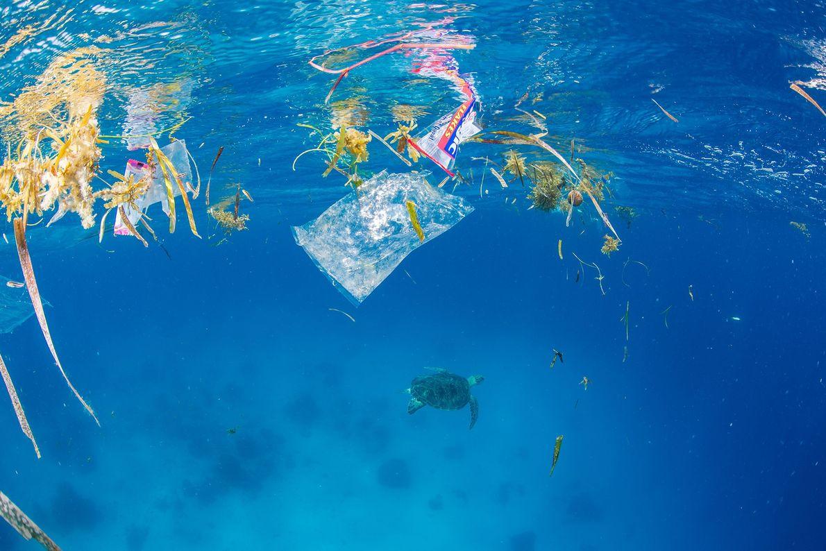 Uma tartaruga-verde nada para longe de lixos e plásticos no mar.