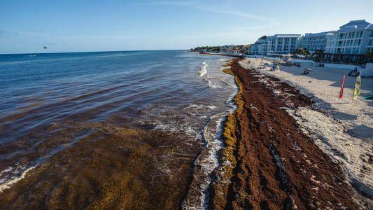 A ciência resolverá o problema das algas nas praias mexicanas?