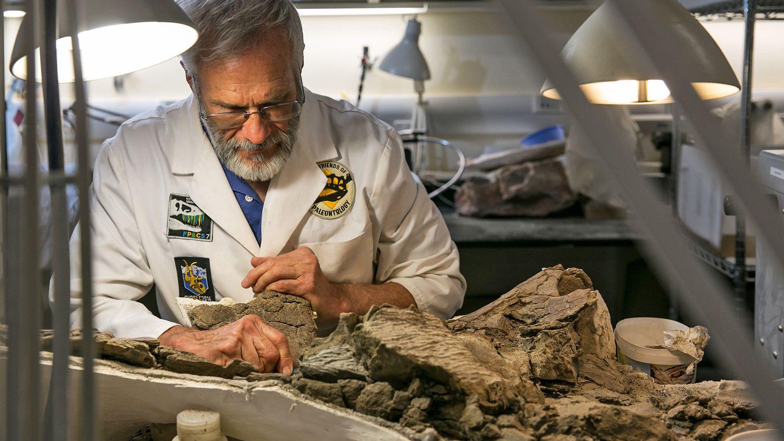 Randy Johnson, um paleontologista voluntário no Museu Histórico Nacional de Utah, cuidadosamente prepara um fóssil no ...