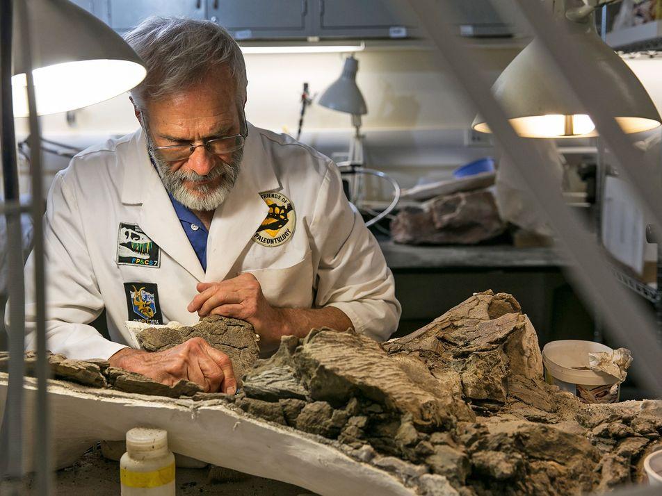 Incrível dinossauro blindado encontrado em monumento nacional ameaçado