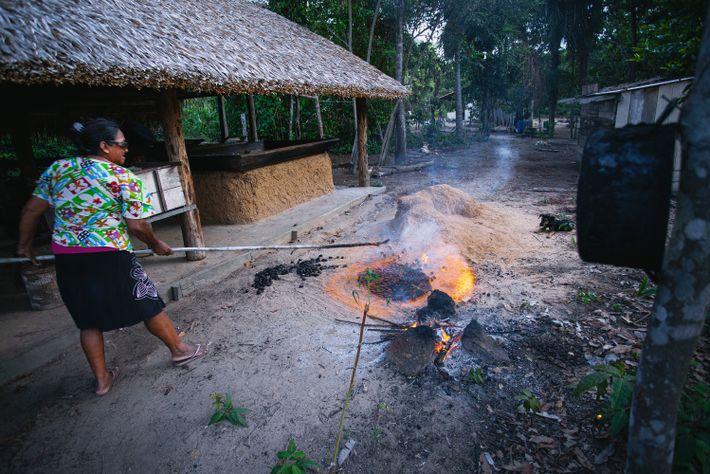 Moradora do rio Tapajós cultiva e limpa seu quintal próximo à roça e ao lado da ...