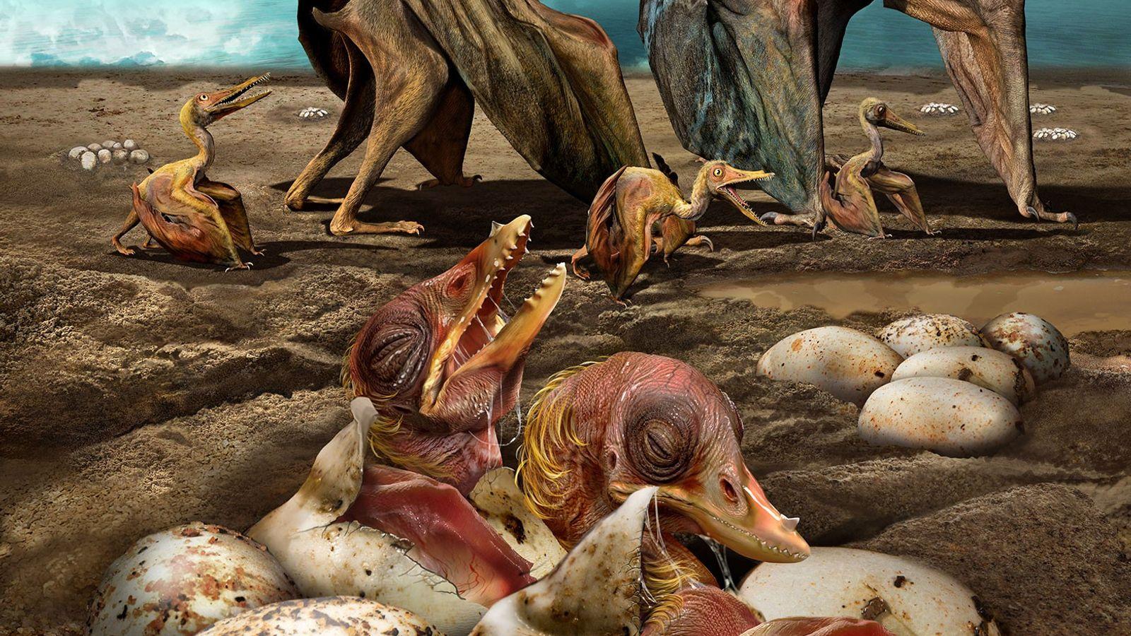 A reconstrução da vida do Hamipterus tianshanensis, espécie de pterossauro que viveu no que hoje é ...