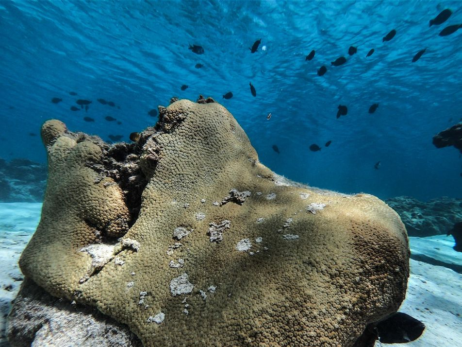 Aquecimento do mar pode dizimar biodiversidade de ilhas oceânicas brasileiras