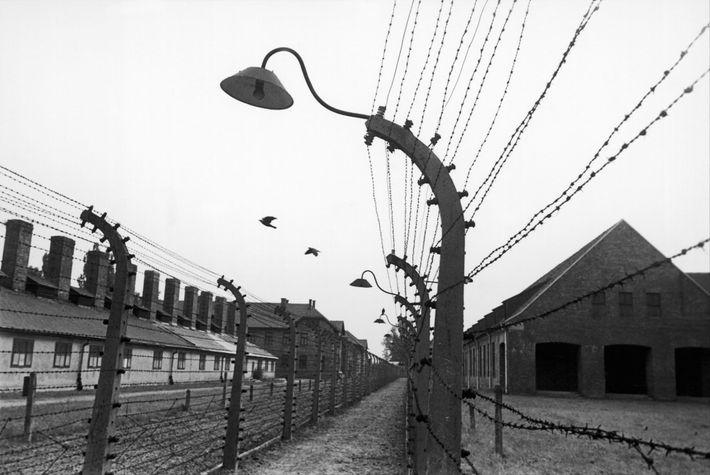 Quando Edith Friedmann e as outras jovens chegaram a Auschwitz, elas não sabiam que eram prisioneiras. ...