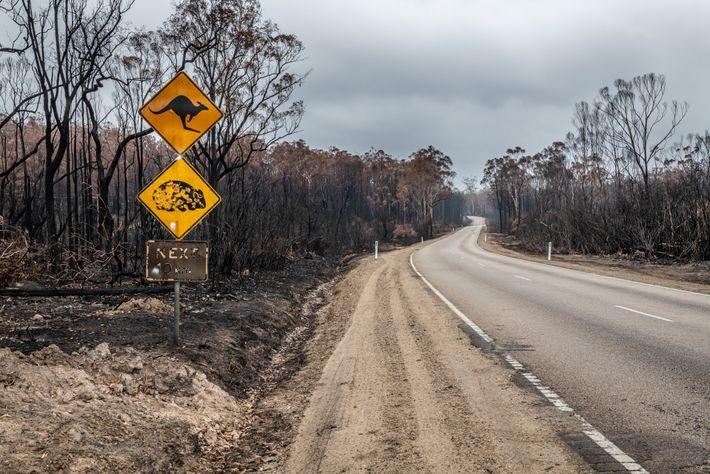 Placas queimadas de aviso de travessia de cangurus e vombates permaneceram de pé em meio a ...