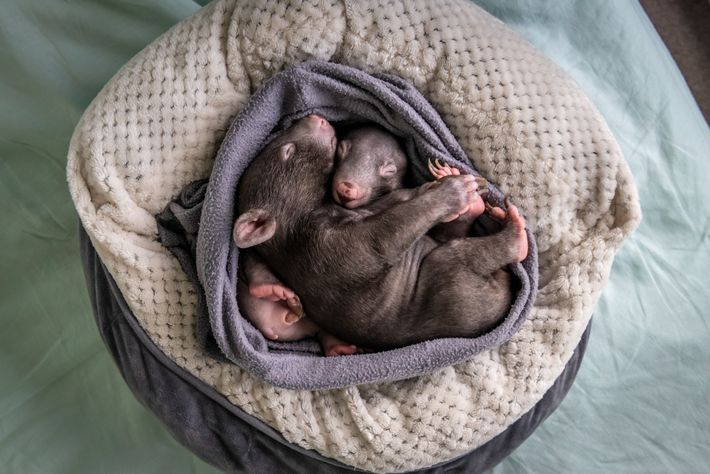 Bronson, de sete meses, e Landon dormem em uma bolsa feita à mão no apartamento de ...