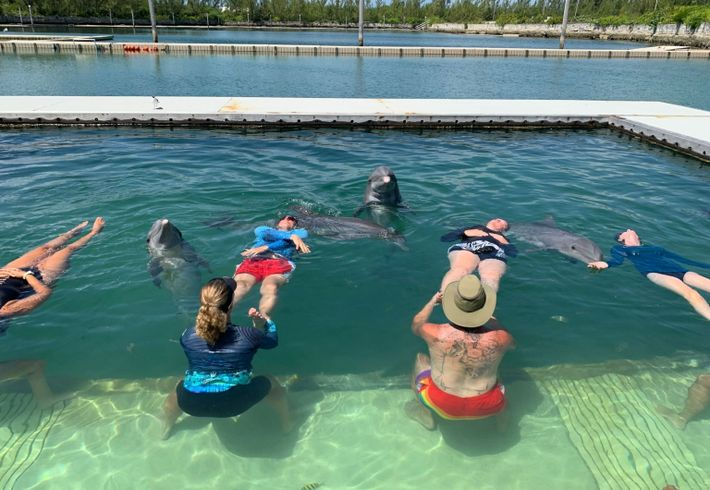 dolphin therapy 5