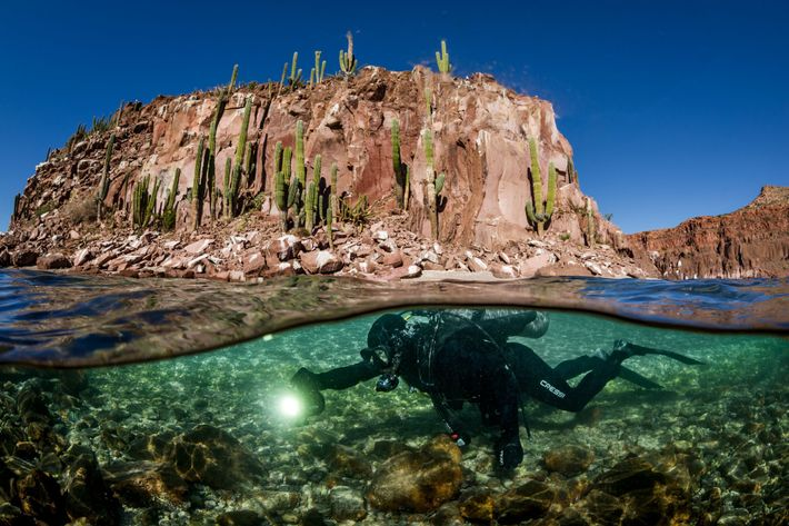 parque-marinho-baja-california