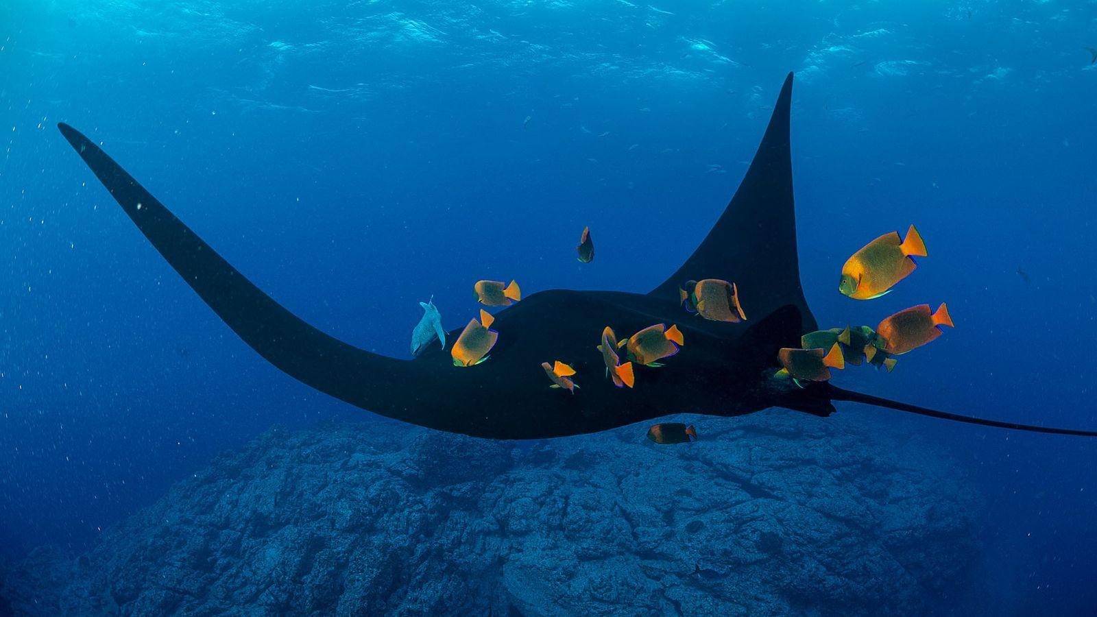 os animais têm papel importante no turismo em lugares como a Reserva da Biosfera Archipiélago de ...