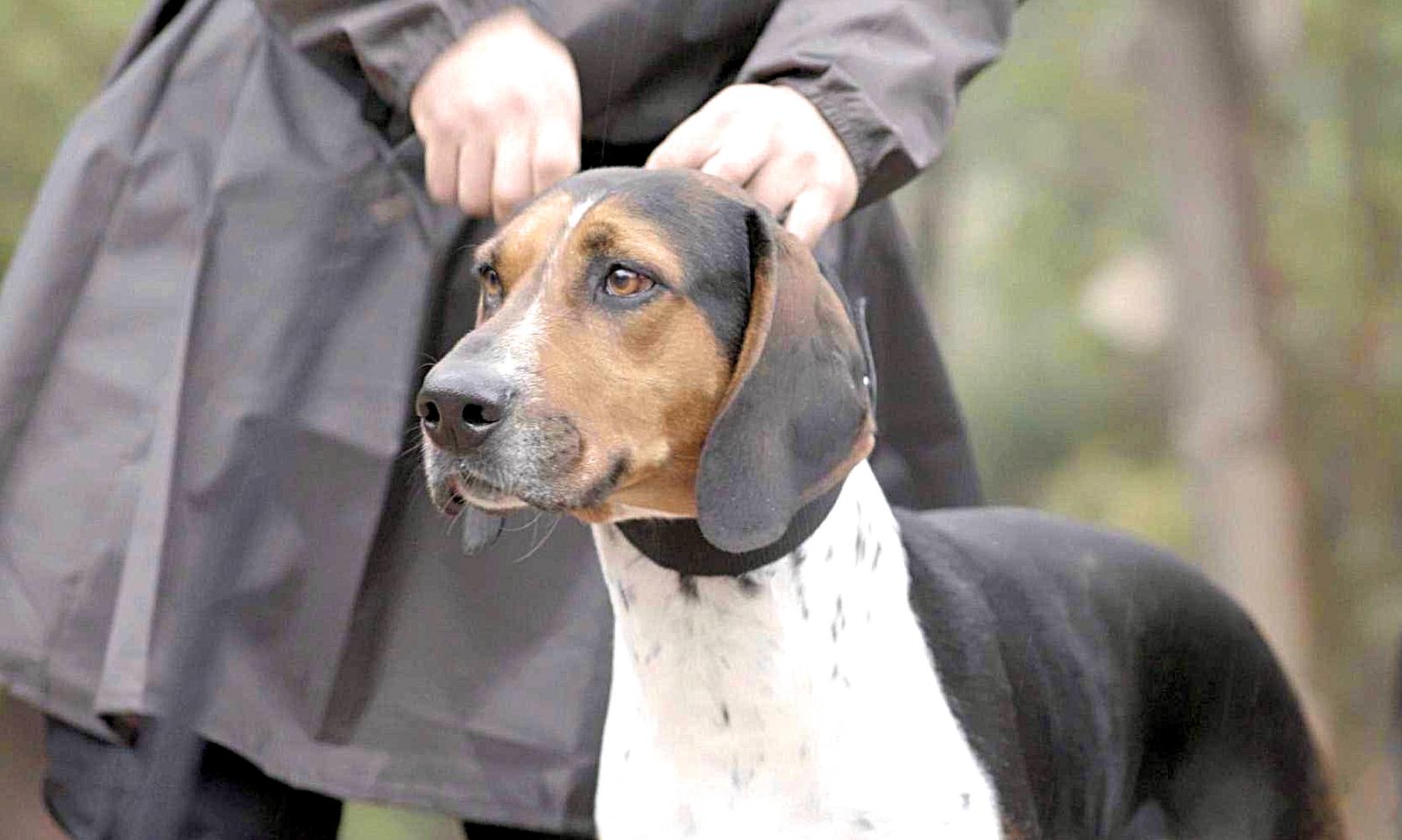 O cão Barão é o líder do time canino de Radar Pet, com mais de 700 ...