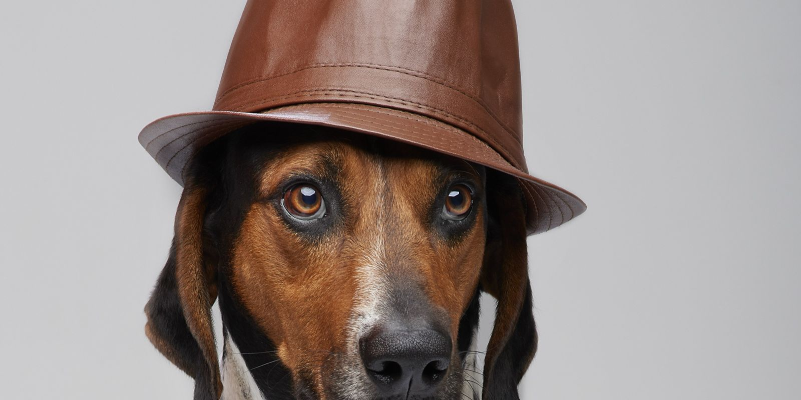 Fotos: conheça os super-heróis caninos de Radar Pet