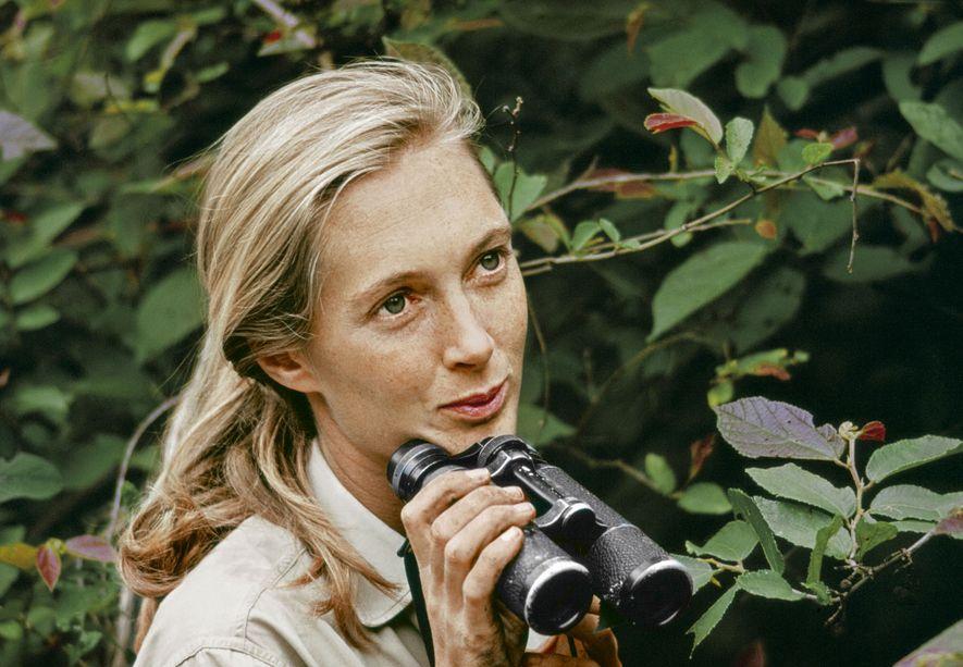 Quem é Jane Goodall
