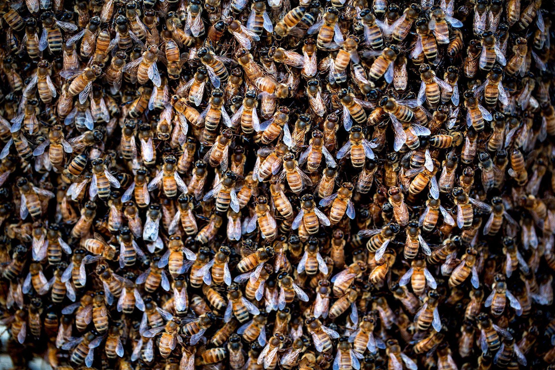 Aumento de 50 vezes no uso de agrotóxicos pode levar a apocalipse de insetos