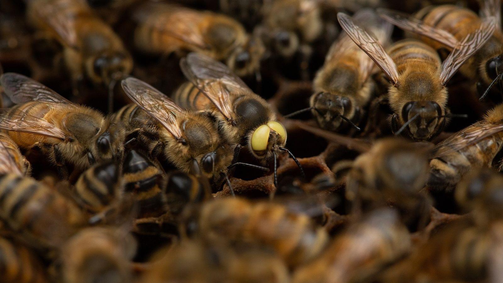 """""""Crio abelhas desde 1976 e é a primeira vez que vejo algo assim"""", diz o mestre ..."""