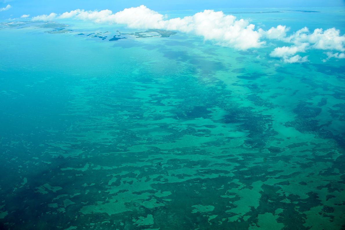 Belize: From Treetop to Reef