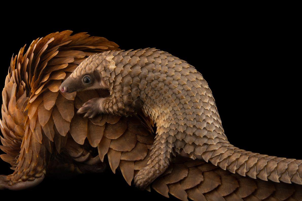 ST. AUGUSTINE, FLÓRIDA, ESTADOS UNIDOS O fotógrafo Joel Sartore passou quase 15 anos fotografando animais em cativeiro ...