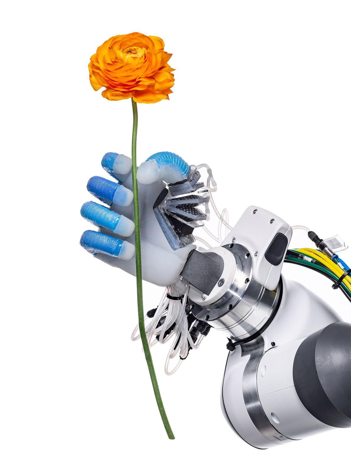 Segurando firmemente, mas também com delicadeza, uma mão robótica do Laboratório de Biologia e Robótica da ...