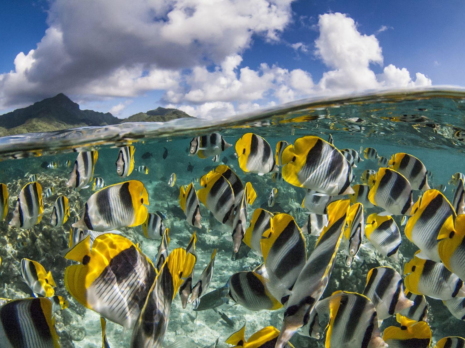 POLINÉSIA FRANCESA  Canais submersos interligam o mar aberto aos recifes circulares das Ilhas de Tuamotu, permitindo ...