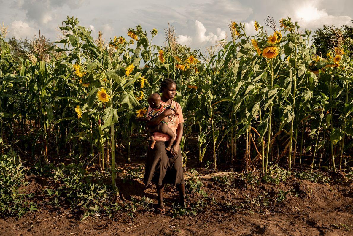 Susan Meneno segura a filha de um ano em frente ao campo de girassóis de sua ...