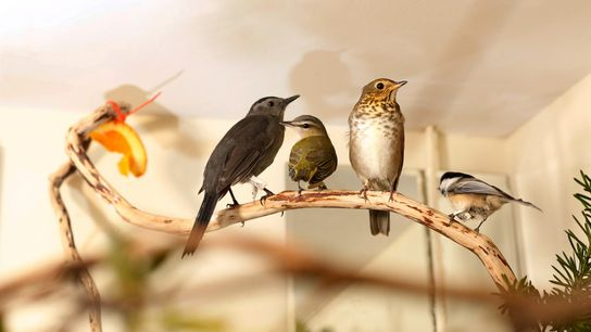 Pássaros resgatados em uma unidade do centro Wild Bird Fund em Nova York, a única instalação ...