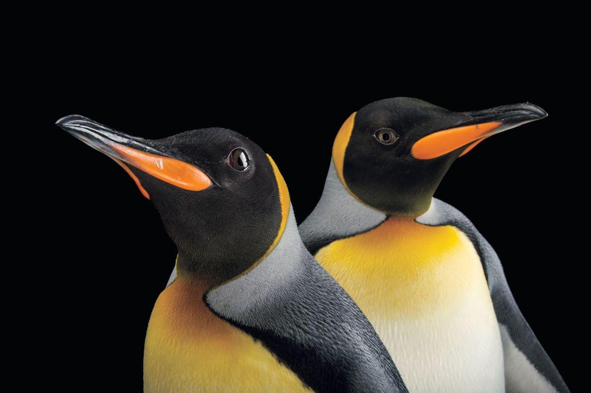 aves-especies-animais-arca-de-fotos