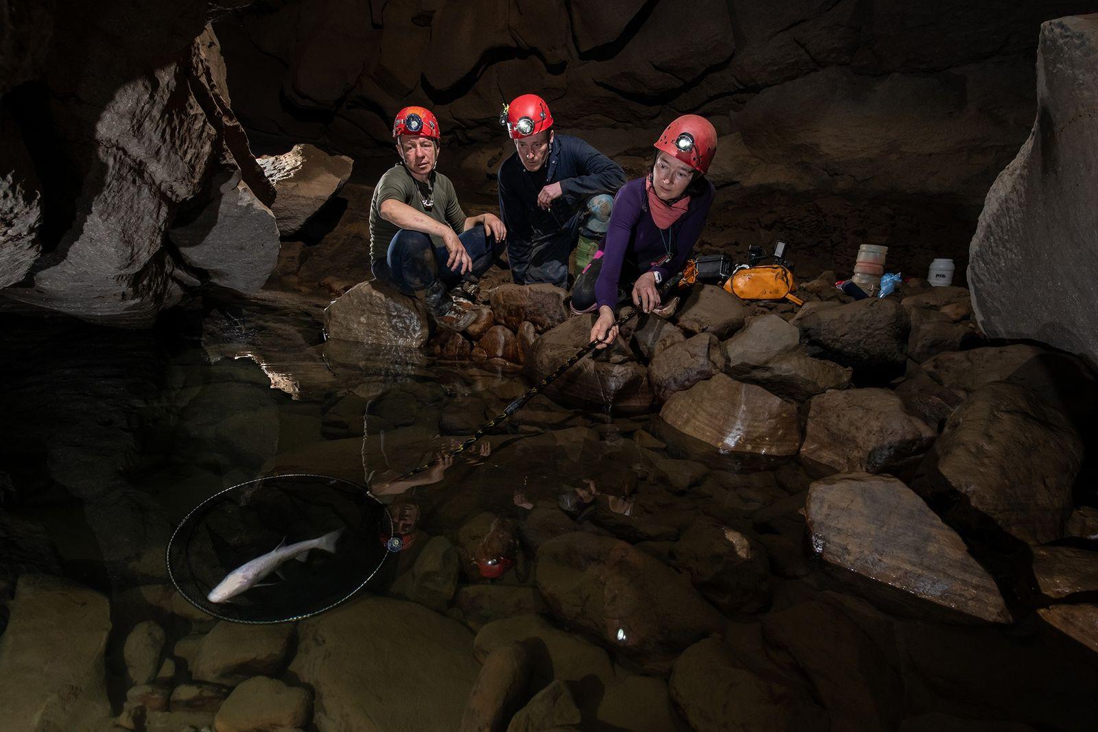 Nicky Bayley, espeleólogo britânico, captura o peixe cego cavernícola em uma rede na caverna Ladaw, enquanto ...