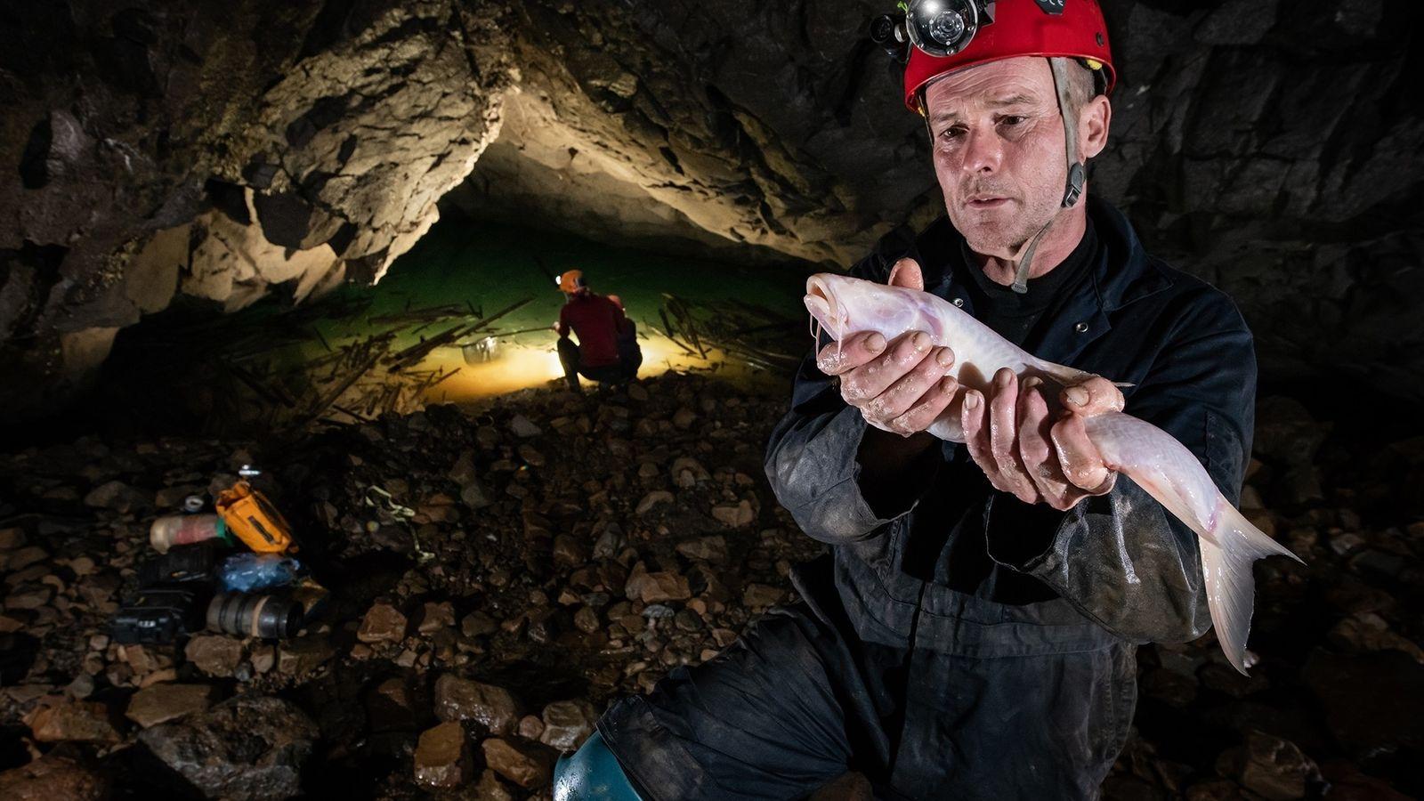 O biólogo Daniel Harries segura um dos maiores peixes cavernícolas do mundo, recém-descoberto na caverna Um ...