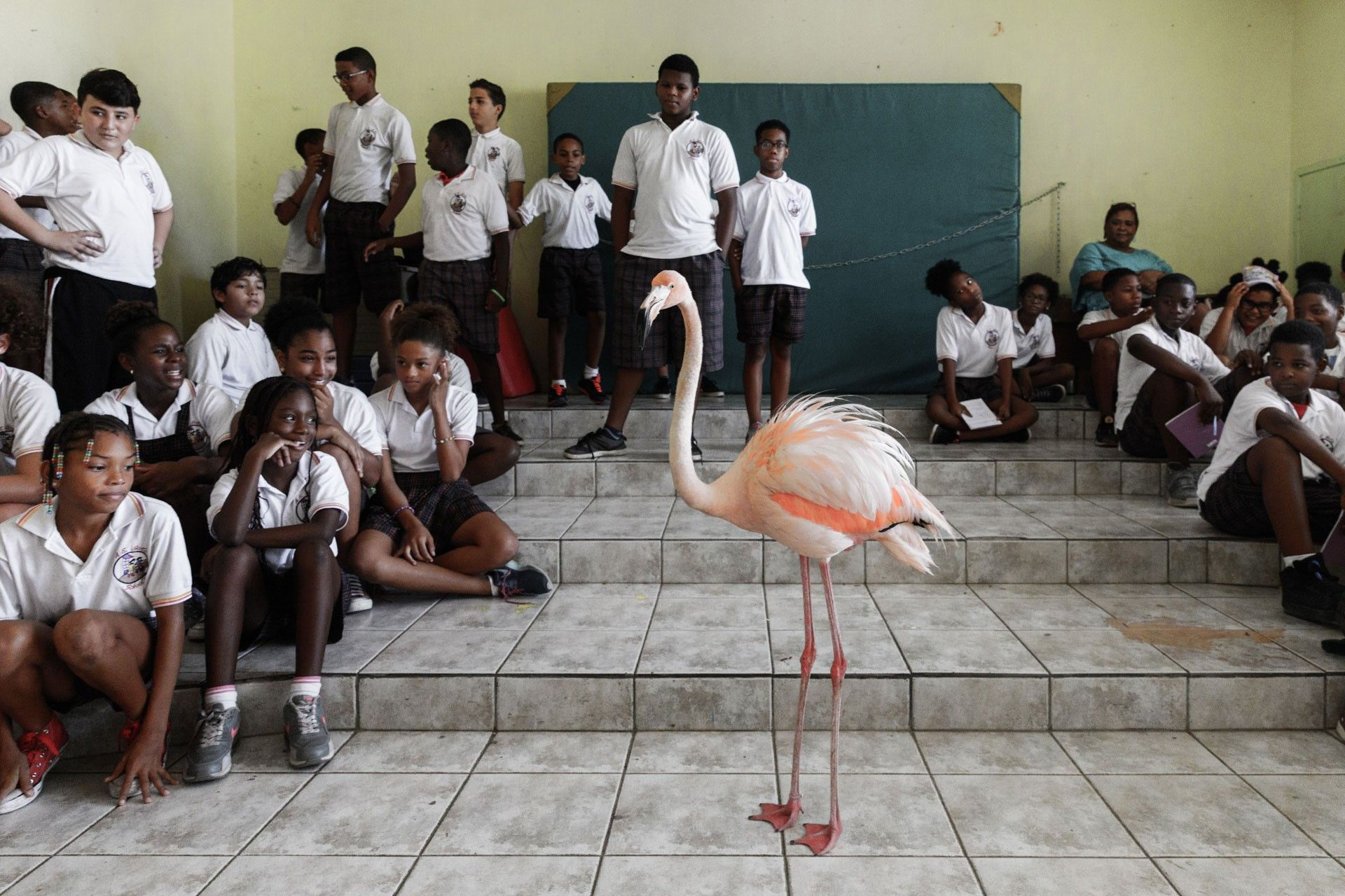 Conheça Bob, o flamingo embaixador de Curaçao | National Geographic