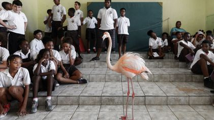Conheça Bob, o flamingo embaixador de Curaçao
