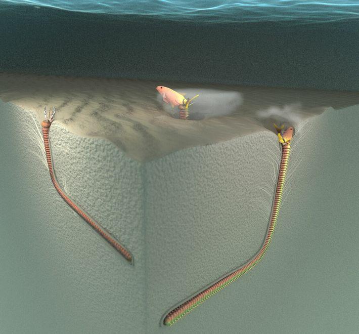 Modelo 3D mostra o comportamento alimentar de um Eunice aphroditois e a forma proposta dos vestígios fósseis, ...