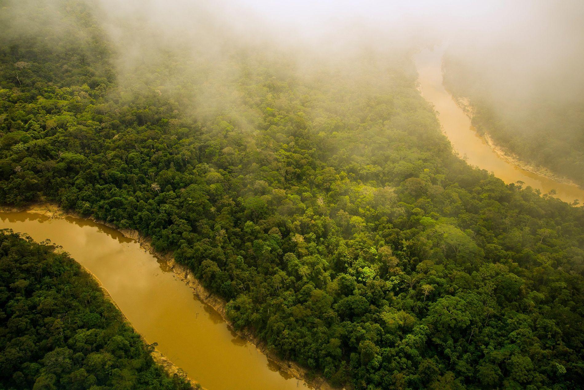 A floresta tropical da Amazônia, mostrada na foto, é mais do que se pode ver, diz ...