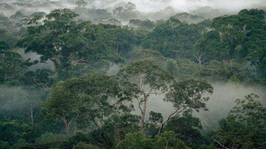 Como os cupins ajudam as florestas equatoriais a sobreviverem às mudanças climáticas