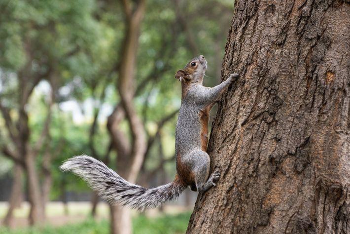 Em todo o planeta, são conhecidas mais de 300 espécies de esquilos. Algumas delas, entre as quais ...