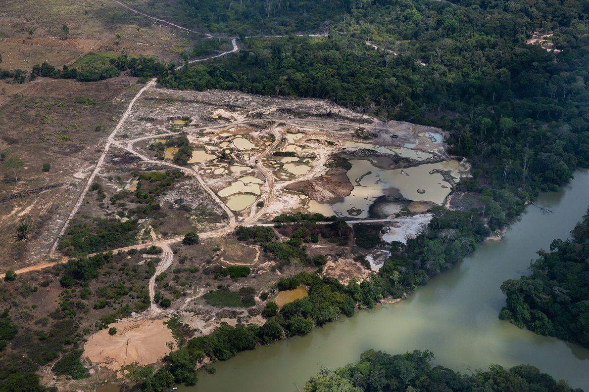 Na Floresta Nacional Jamanxim, dentro da área a ser transformada em Área de Proteção Ambiental (APA), ...