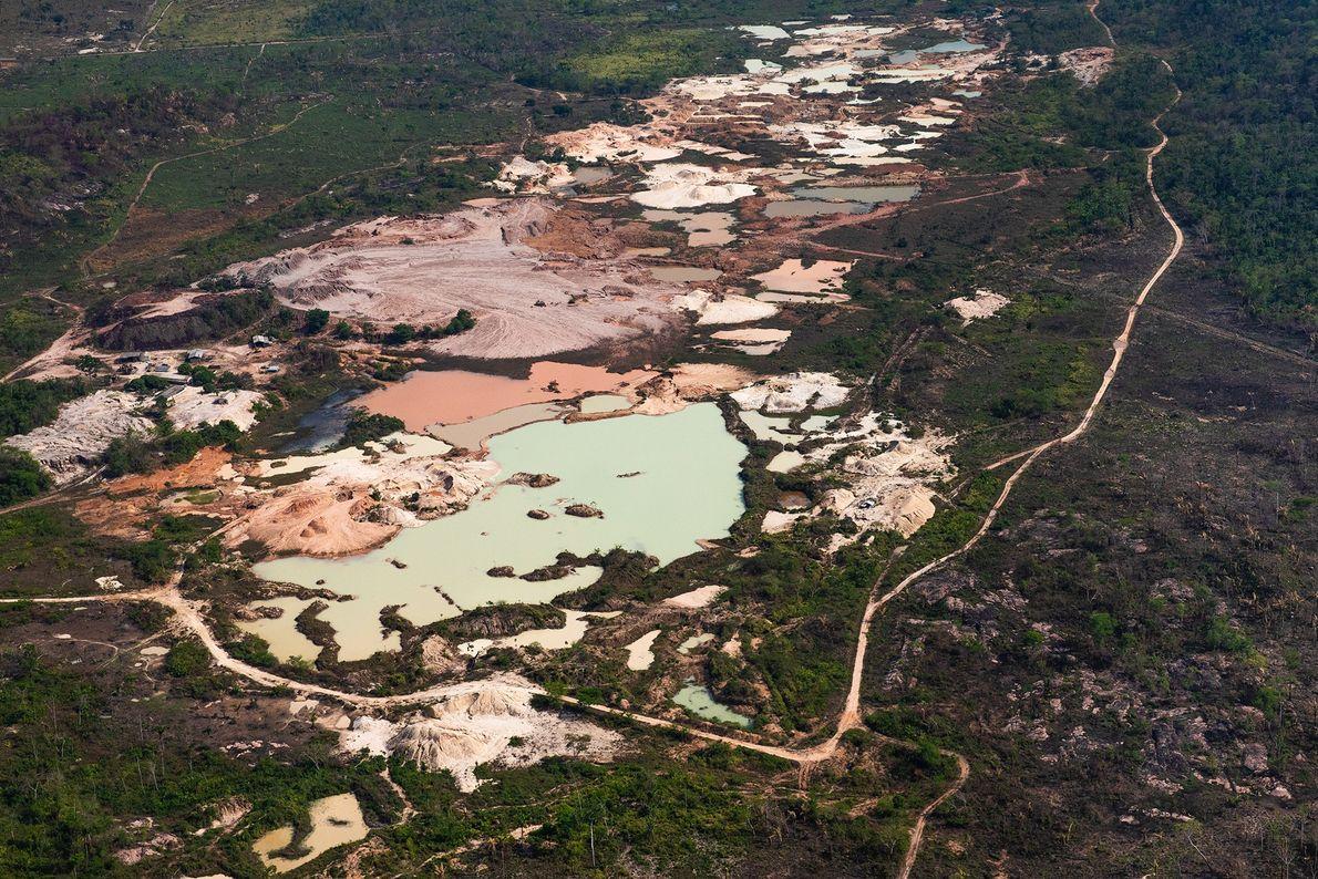 O município de São Félix do Xingu (PA) possui uma área de 84 mil km², dos ...