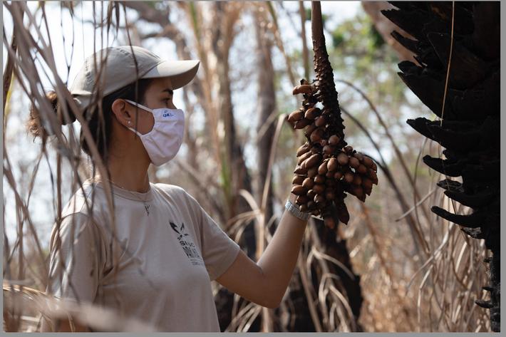 Cristina Cuiabália analisa um acuri na RPPN Sesc Pantanal.