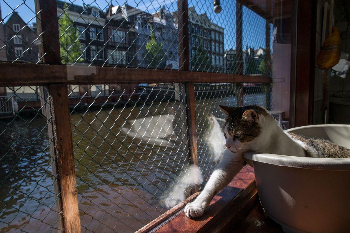 Icey, um gato macho de oito anos, desfruta do sol no convés do Catboat.