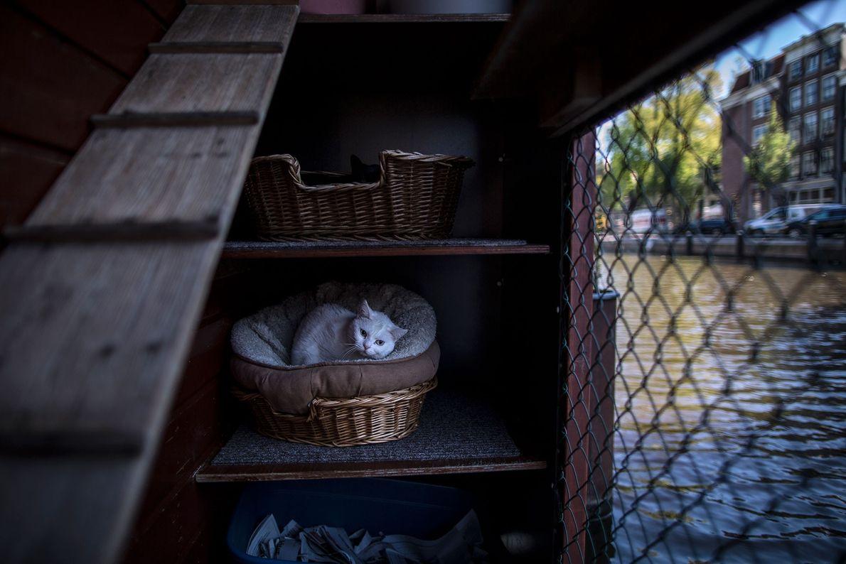 Fibi, uma gata de quatro anos, descansa em uma cesta no convés.