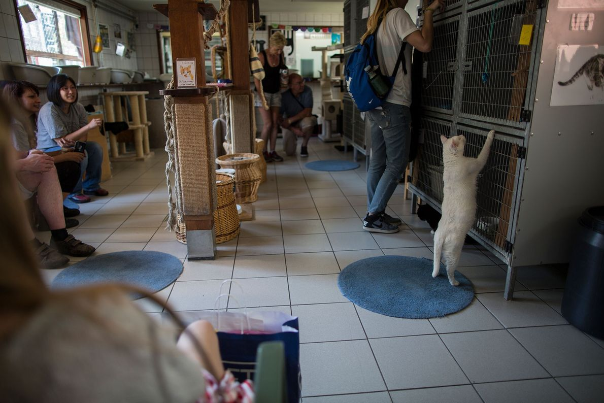 Milhares de visitantes, principalmente turistas, vão ao Catboat todos os anos.