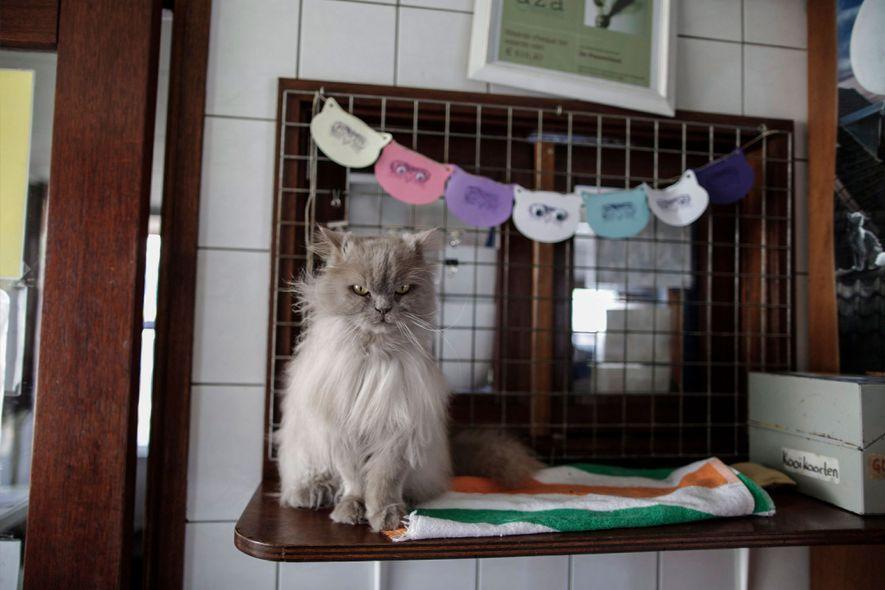 Kasumi espera para ter seu pelo escovado por um dos voluntários.