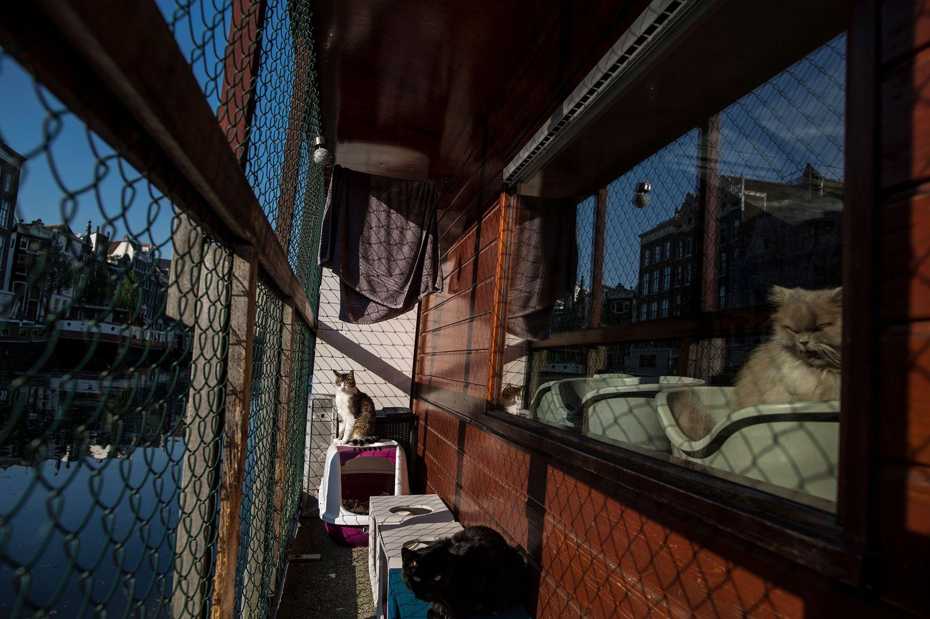 Borre, à esquerda, um macho de nove anos de idade, curte o sol no convés do Catboat enquanto Kasumi, à direita, uma fêmea de 10 anos, olha pela janela.
