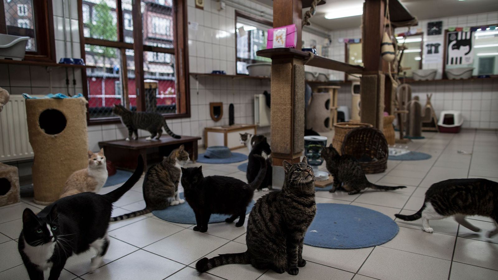 Gatos se reúnem na hora da refeição no Catboat.