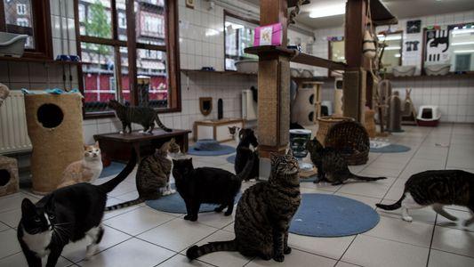 Conheça o Catboat, único santuário de animais flutuante do mundo