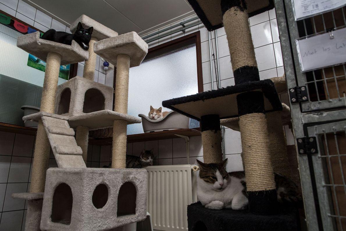 Uma gata de quatro anos chamada Suus, no alto à esquerda, descansa ao lado de Samus, ...