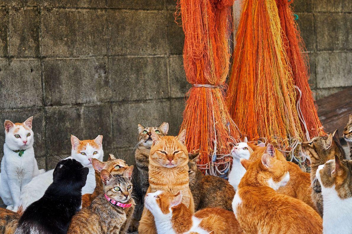 """Esses felinos vivem em uma das quase doze """"ilhas de gatos"""" no Japão. Os fotógrafos dizem …"""