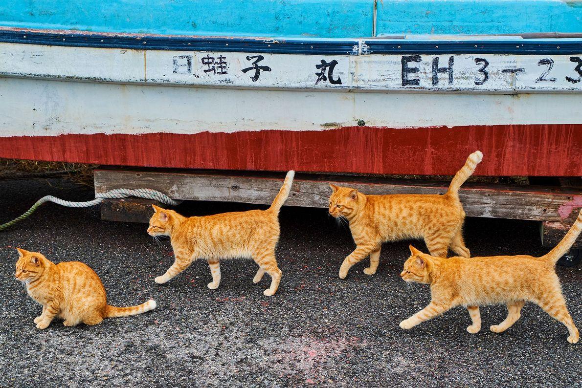 """Gatos caminham próximo a um barco de pesca no Japão, onde os felinos têm um """"relacionamento ..."""