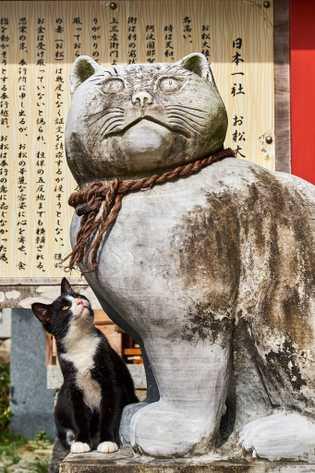 Em Tóquio, há diversos templos dedicados aos gatos. Nesses santuários, visitantes podem ver tanto estátuas de ...
