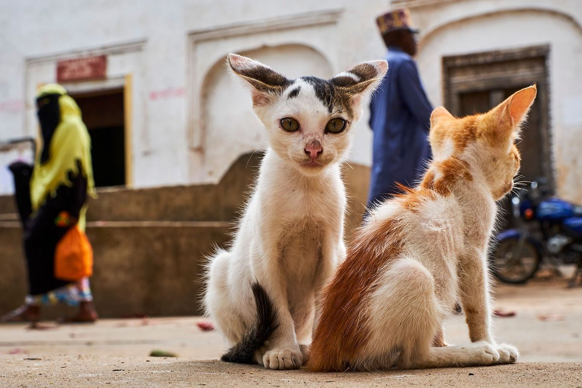 Filhotes na Cidade Antiga de Lamu, o mais antigo assentamento Swahili no Leste da África e ...