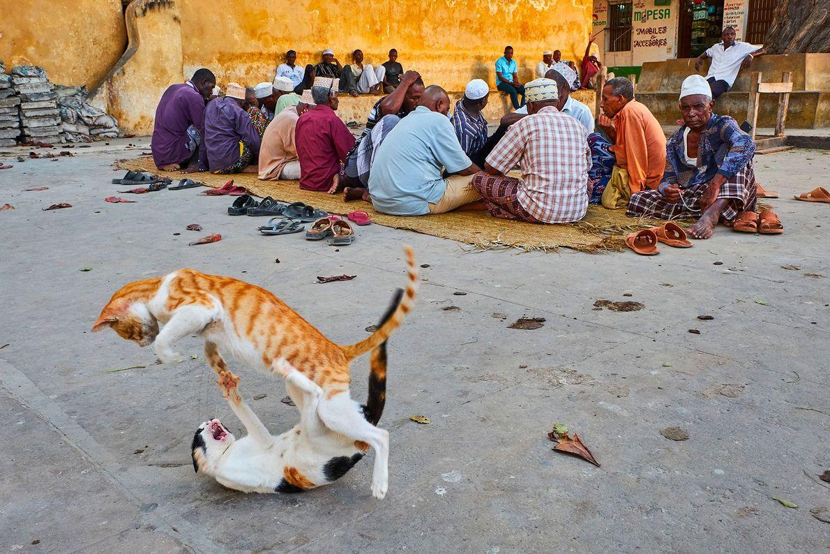 Gatos brincam de luta ao lado de moradores indiferentes em Lamu, no Quênia.