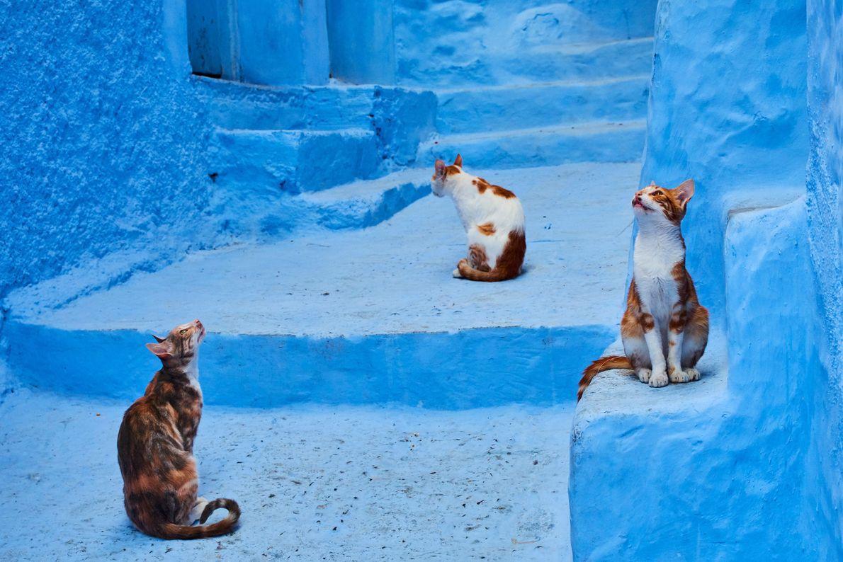 Gatos observam os arredores em Chefchaouen, Marrocos.